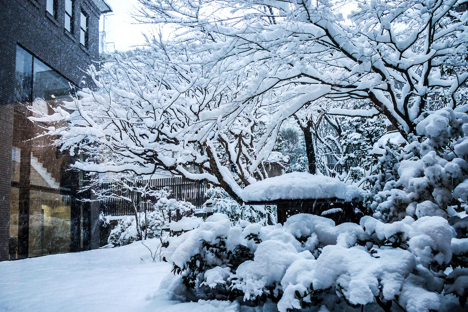 四季を彩る中庭 雪