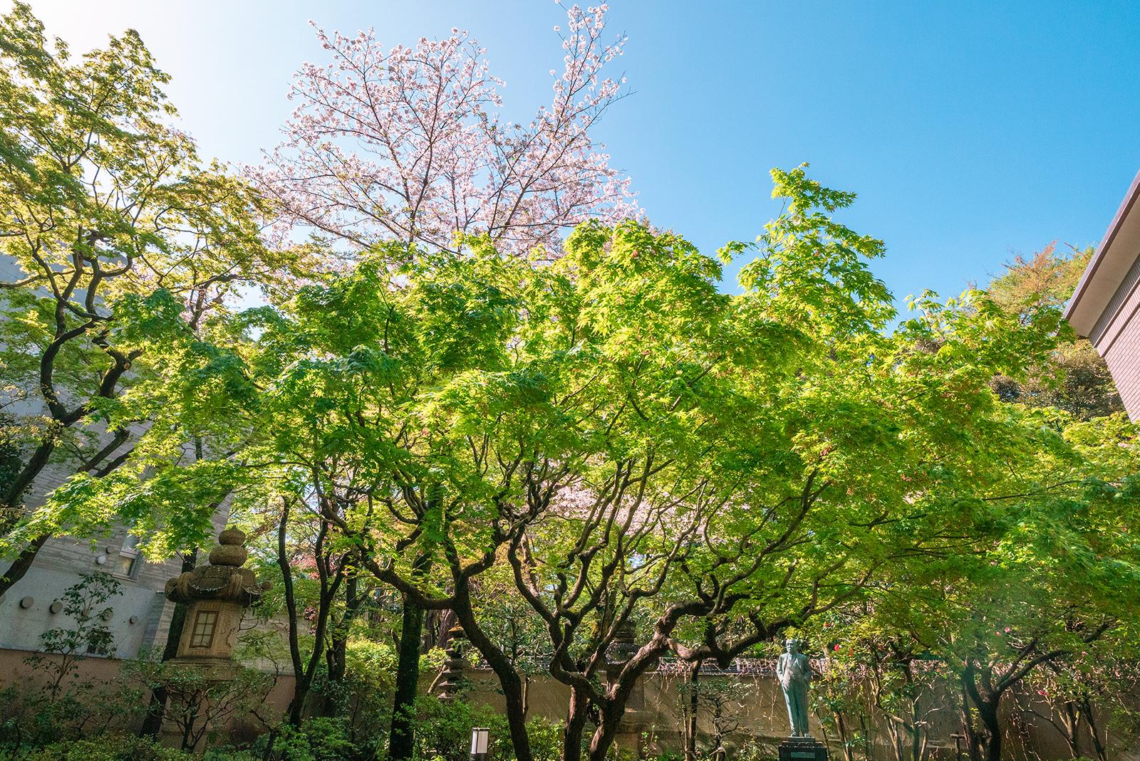 四季を彩る中庭 桜
