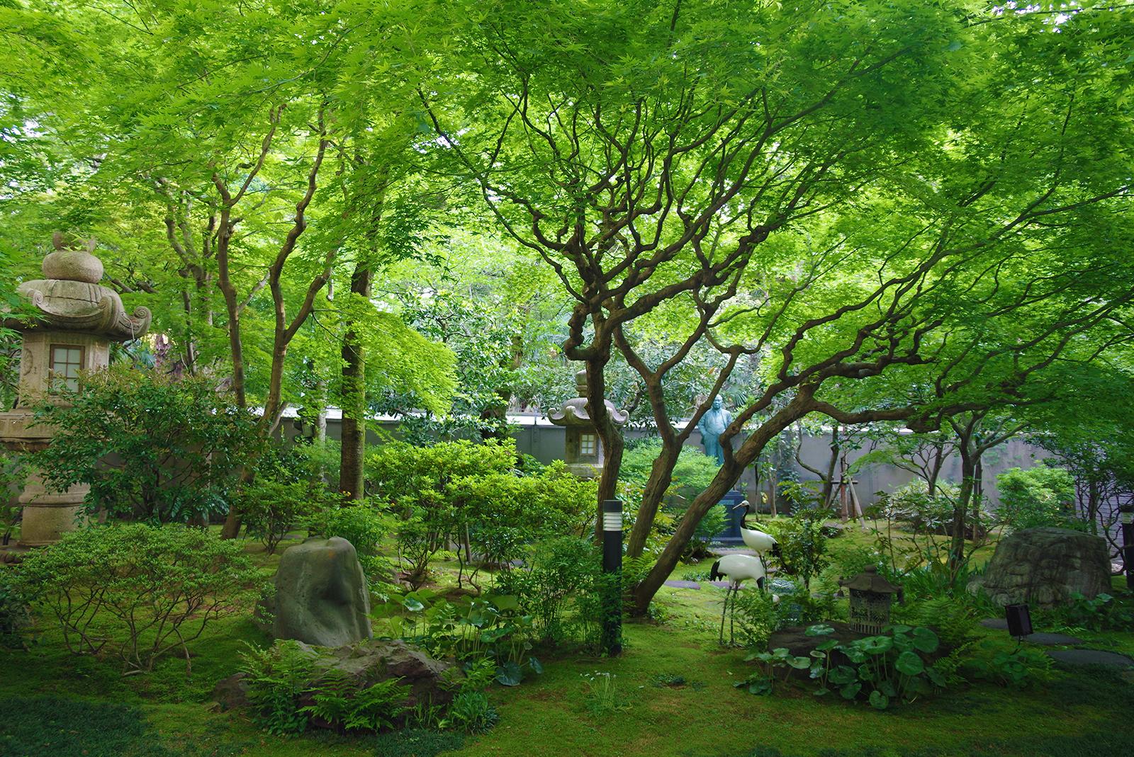 四季を彩る中庭 新緑